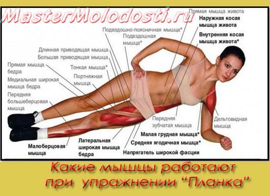 Какие мышцы работают в упражнении Планка